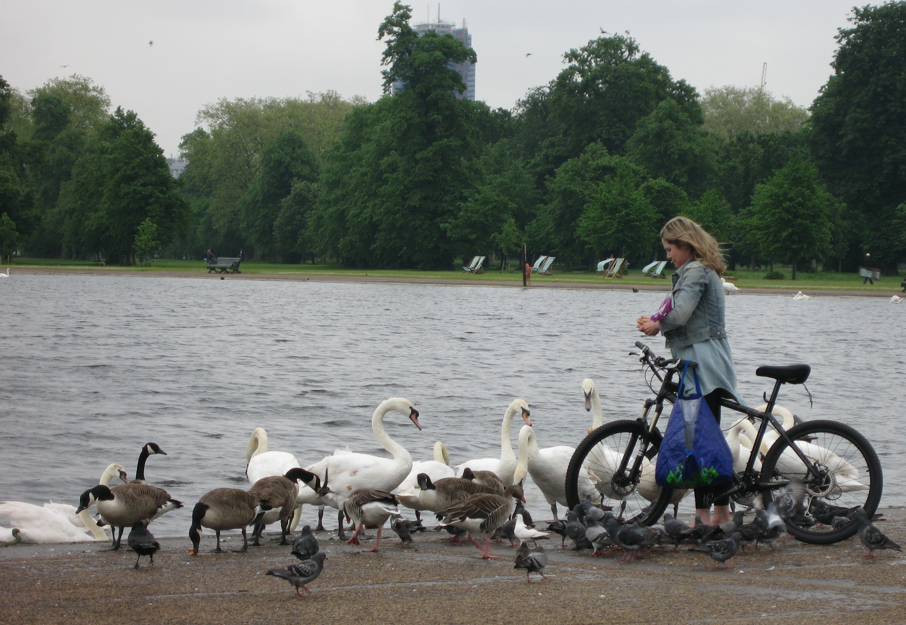 Kensington's ducks being fed. Photo by me.