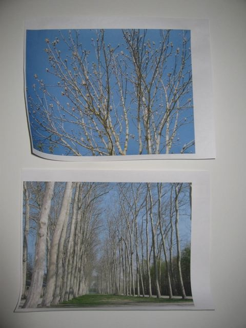Trees at Versailles near Paris. Photo and photos by me