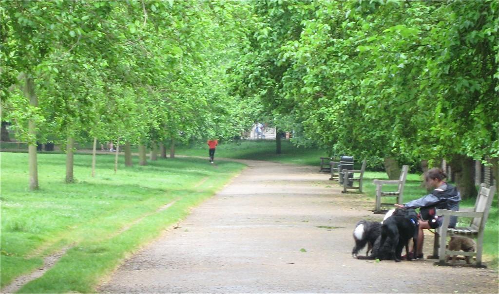 A dog walker takes a break in KG. Photo by me.