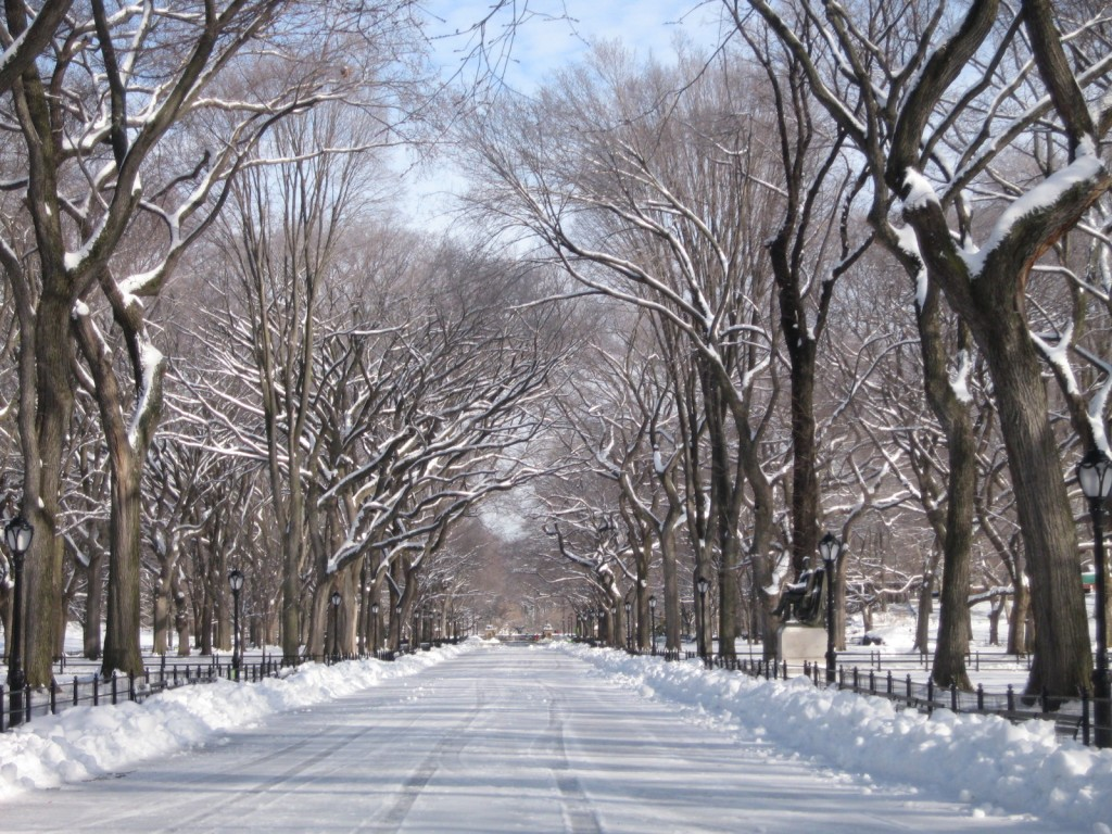 The avenue of old elms was closed to pedestrian traffic for fear of falling ice and branches.