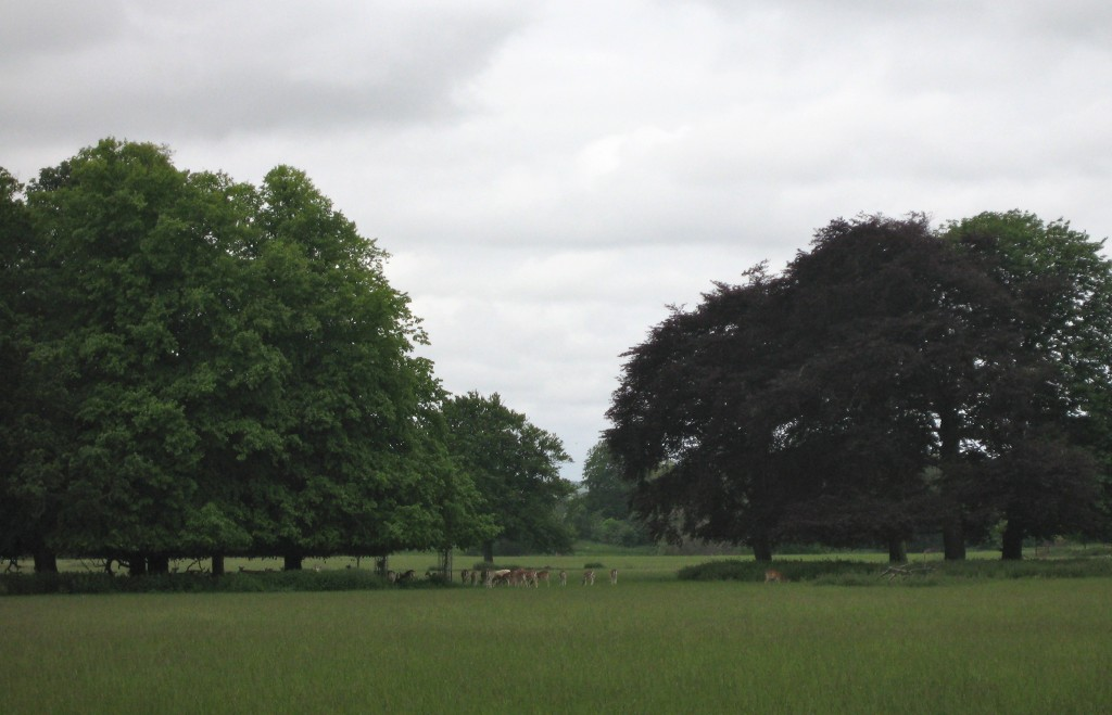 A deerpark in Norfolk England